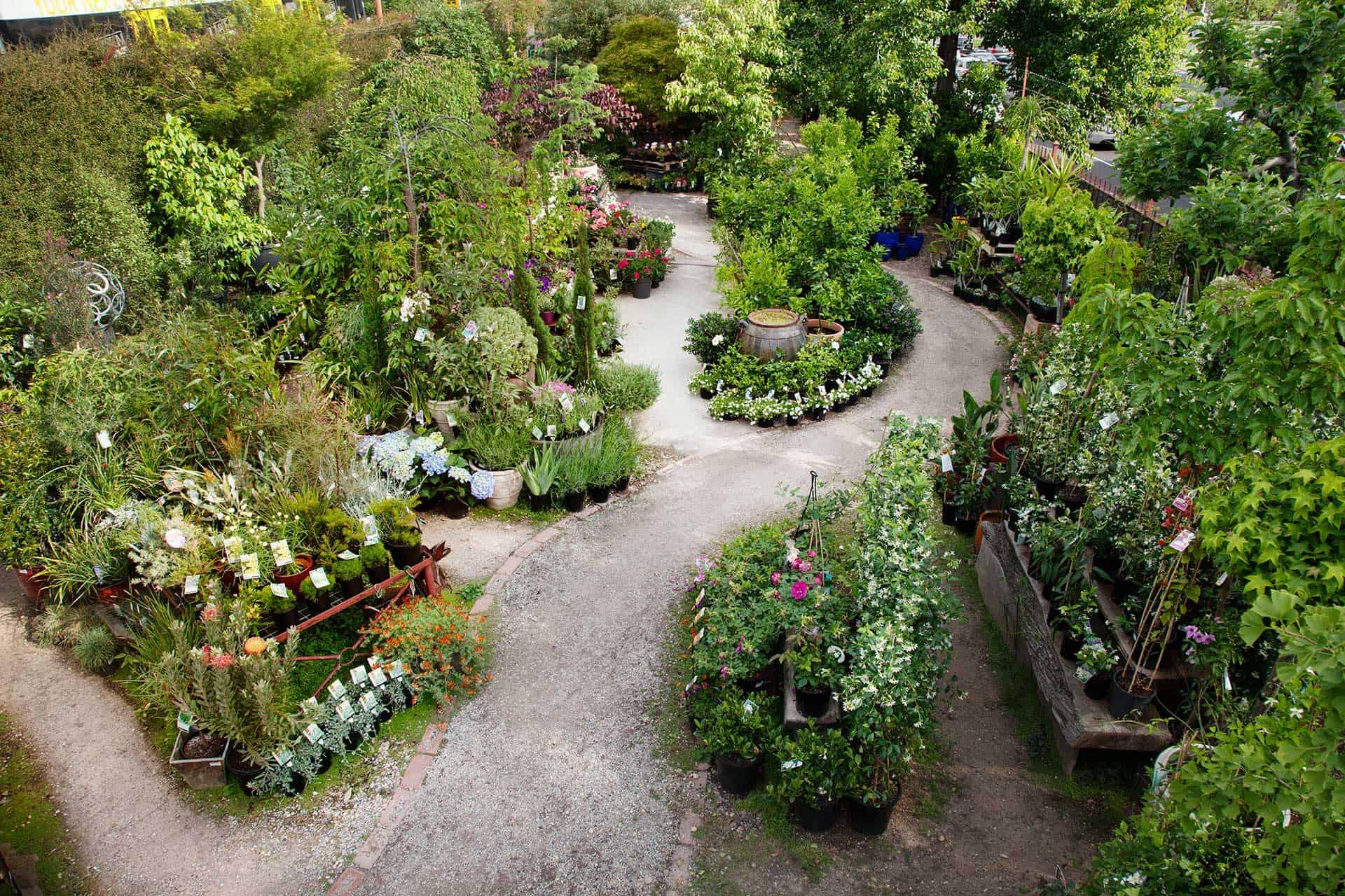 Garden of Eden Nursery outdoor plants