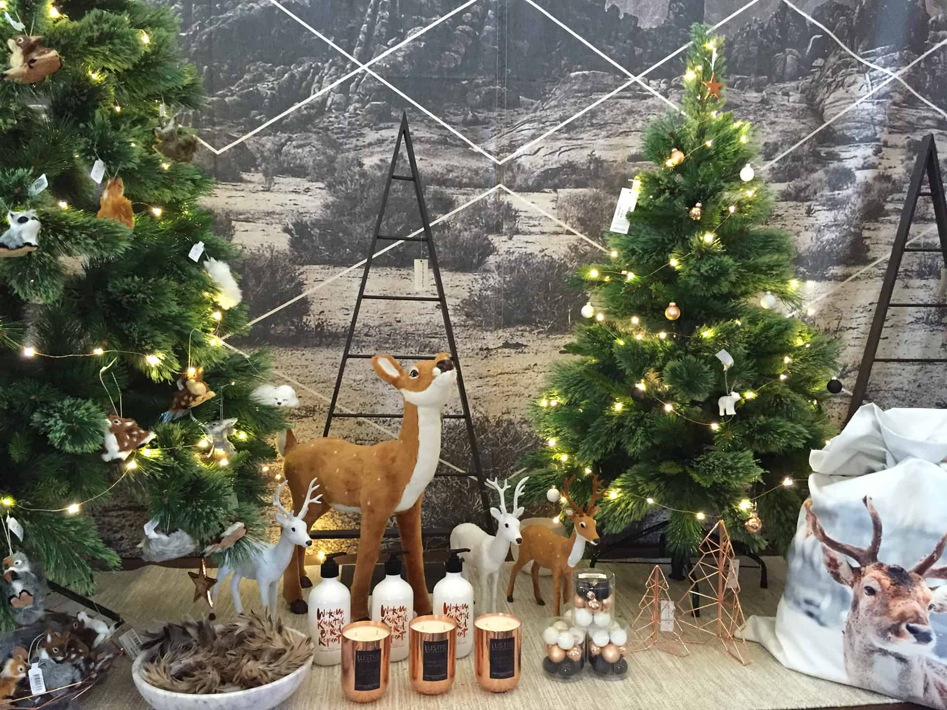 Celebrate christmas in style | The Garden of Eden Nursery