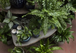 HOW TO CARE FOR YOUR INDOOR PLANTS DURING WINTER